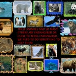 most-endangered-animals
