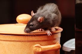 How-to-get-rid-of-mice
