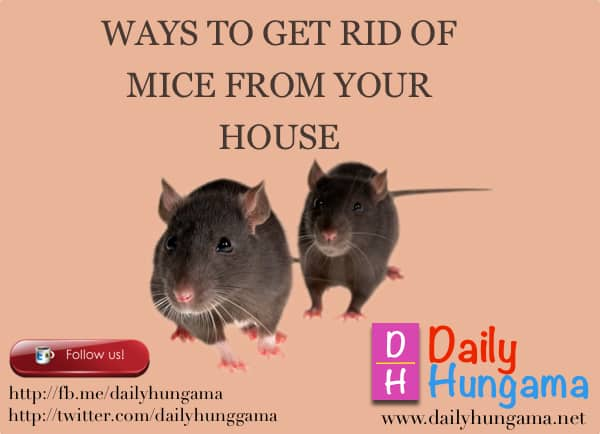 Methods to Get Rid of Mice